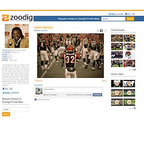 Wordpress Website Development - zoodig